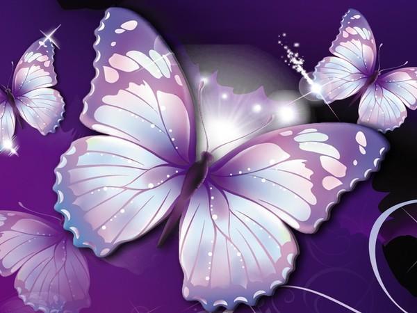 fond ecran papillons