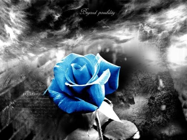 Rose Bleu Sur Fond Noir Et Blanc