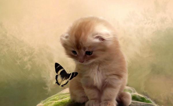 Fond ecran chat - Jeux de petit chaton gratuit ...