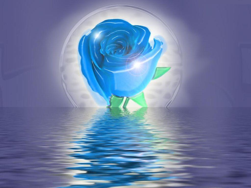 Belle Image Rose Bleu rose bleu /océan